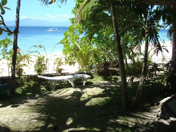 ravenala moalboal resort