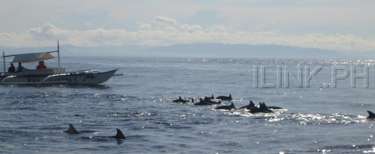bohol tour dolphin watching