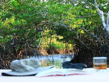 the funny lion inn - view of mangrove area