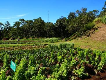 eden nature park_vegetable garden