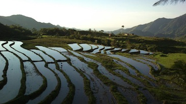 cebu mountain bike tour_batbat rice terraces