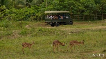 cebu safari_african savanna