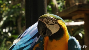 cebu safari adventure park_macaw