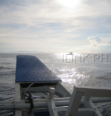 bohol dolphin watching