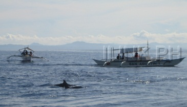 dolphin and whale watching bohol